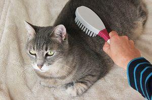 Îngrijirea pisicilor