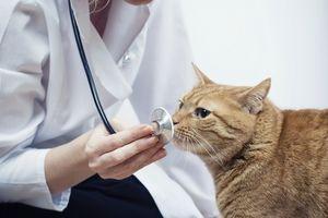 Tratamentul pisicilor