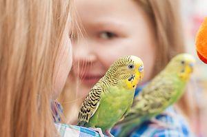 Fata și papagalul