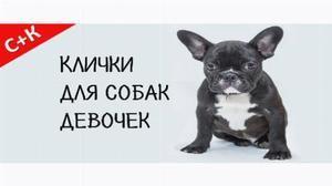 Moda porecle pentru câini