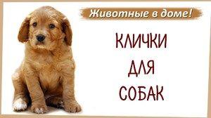 Numele câinilor