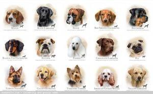 Poreclele moderne ale câinilor