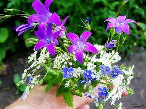 Ce flori de pădure cresc bine pe paturile noastre de flori