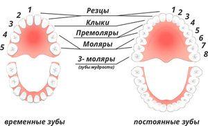 Durata schimbării dinților