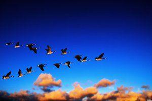 Ce păsări zboară mai întâi la sud