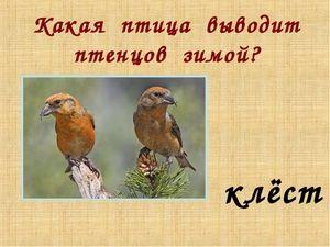 Ce păsări în natură aduc puii în timpul iernii și de ce