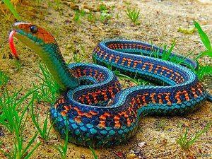 Ce fel de șerpi sunt