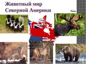 Ce animale trăiesc în America de Nord
