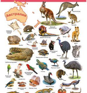 Animalele care trăiesc în America de Nord