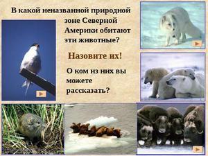 Locuirea animalelor sălbatice