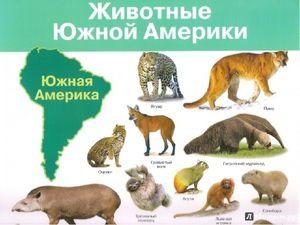 Lista animalelor care trăiesc în America de Nord