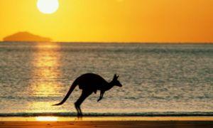 Kangaroo trăiește numai în Australia și este simbolul său