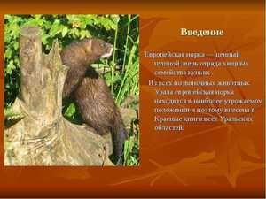 Animale rare din cartea roșie