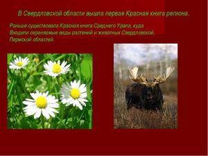 Ce animale sunt incluse în cartea roșie