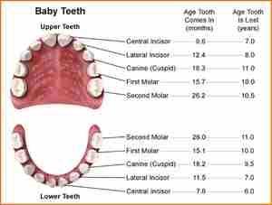 Când un copil începe să-și schimbe dinții