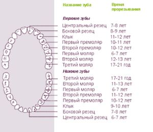Ce dinti se schimba permanent