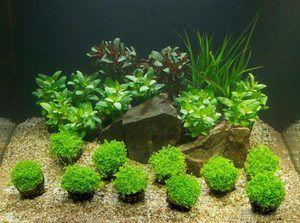 Grund nutritiv în acvariu