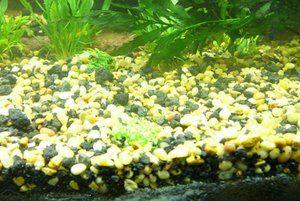 Amestecul Kako în acvariu este mai bun