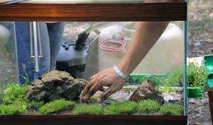 Nisip de mare pentru un acvariu