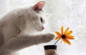 Ce miros respinge pisicile