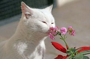Repetarea mirosului pentru pisici