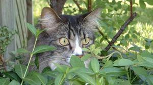 Ce miros nu-i plac pisicile si pisicile