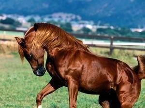 Horseracing pentru cai