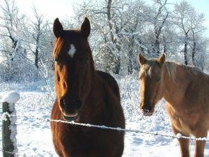 Care este numele calului?