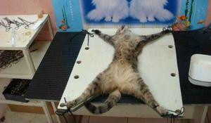 Sterilizarea pisicilor