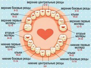 Ce timp au dinții