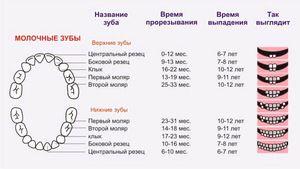 Diagrama înlocuirii dinților din lapte la copii