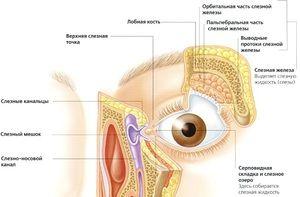 Funcțiile de lacrimi-revizuire