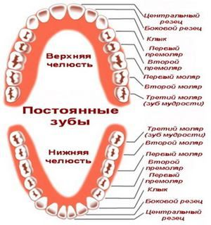 Planul de dentiție