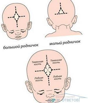 Structura capului la nou-născuți