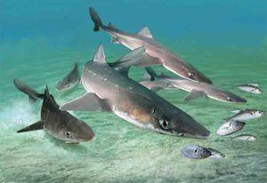 rechini Katrana