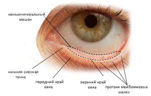 Structura sacului conjunctival al ochiului