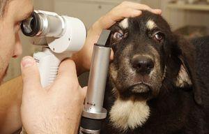 Examinarea de la un medic veterinar