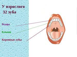 Cum este aranjată cavitatea orală
