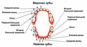Cum să ai grijă de dinții tăi