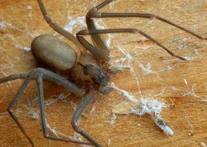 un mod de viata si reproducere a crabului hermitului