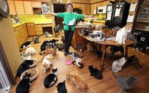 multe pisici