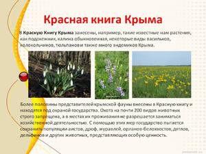 Cartea Roșie a Crimeei