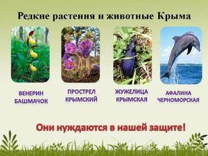 Plante rare și animale din Crimeea