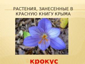 Animale enumerate în Cartea Roșie a Crimeei