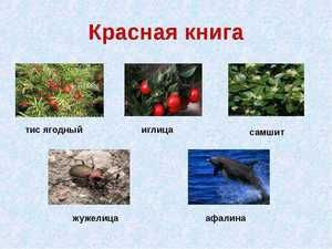 Plante din Cartea Roșie din Crimeea