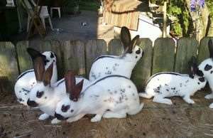 Bunny Rabbit Photo