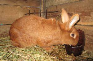 imagini de carne de iepure