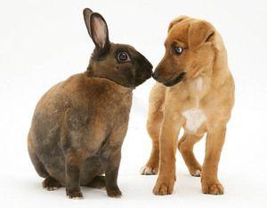 Rabbit Rex și cățelușul sunt prieteni