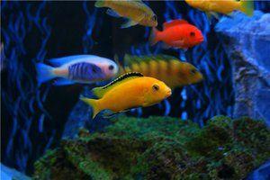 Caracteristicile aspectului peștilor
