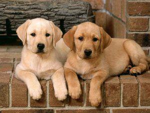 Medicină pentru câini